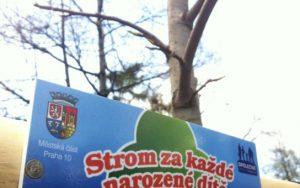 MČ Praha 10 vysadila 33 nových stromů za narozené děti